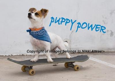 skateboardpup